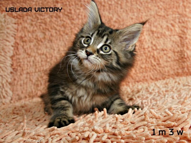 Uslada Victory, 2 m 3 w