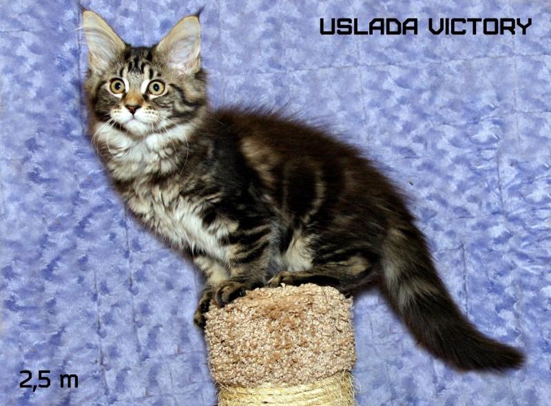 Uslada Victory, 2,5 m