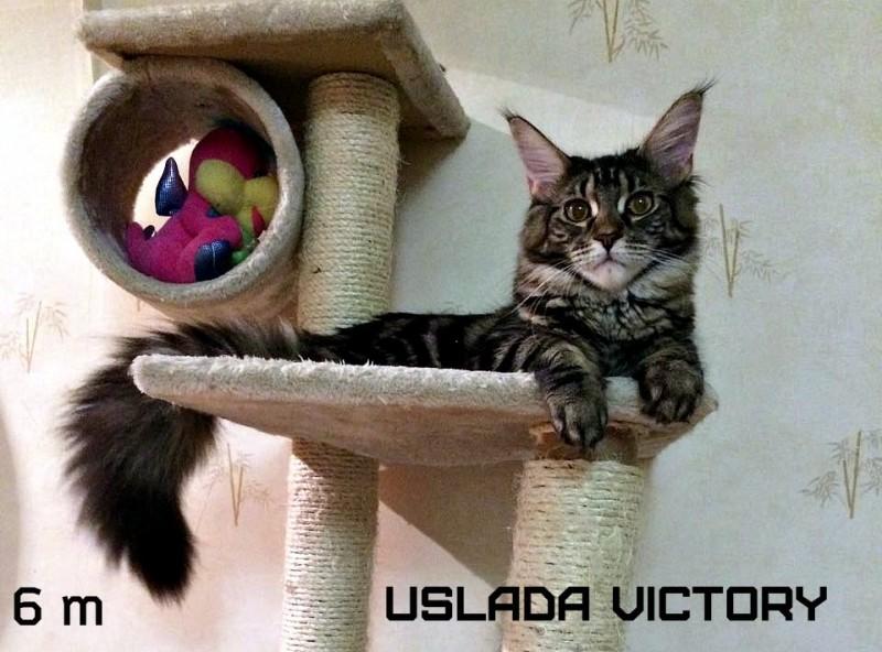 Uslada Victory, 6 m