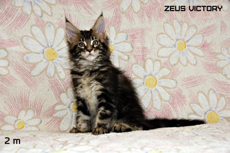 Zeus Victory, 2 месяца