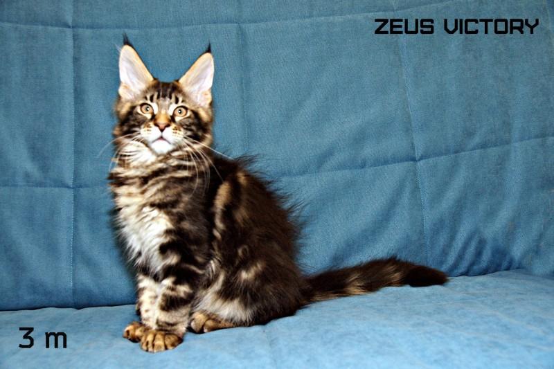 Zeus Victory, 3 месяца
