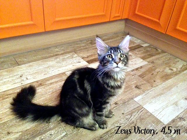 Zeus Victory, 4,5 месяца