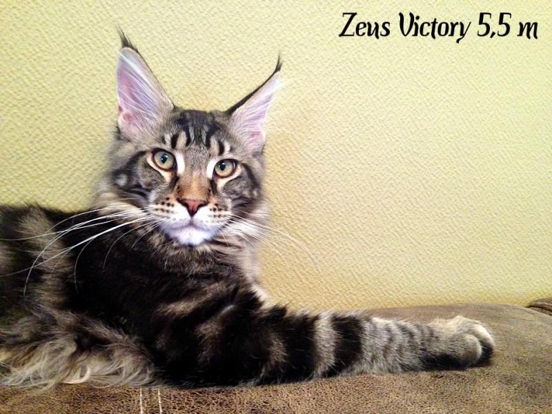 Zeus Victory, 5,5 месяца