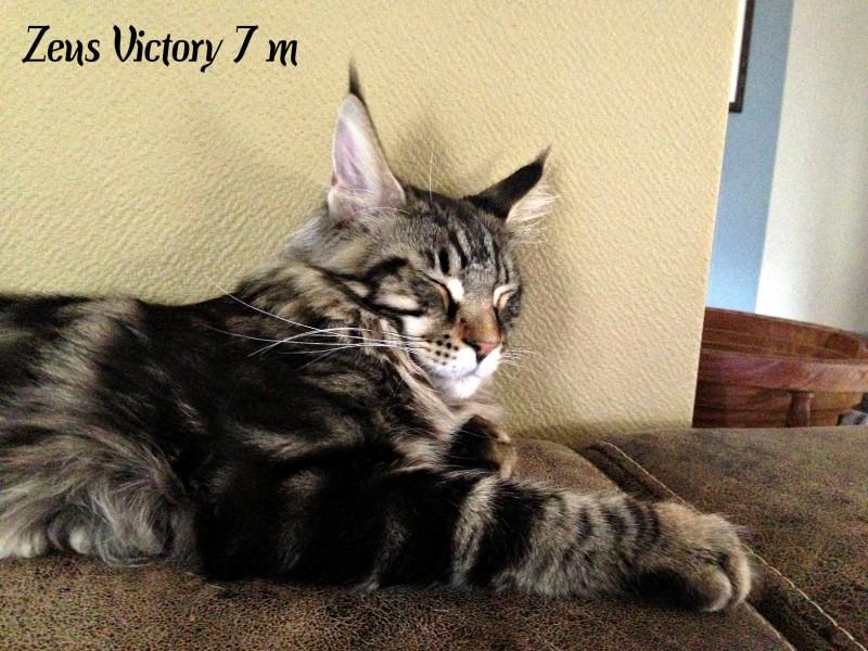 Zeus Victory, 7 месяцев