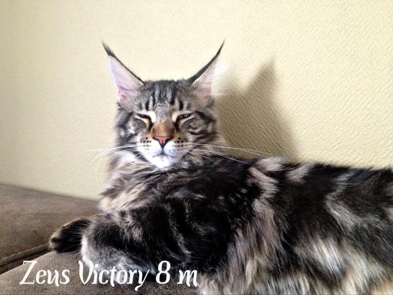 Zeus Victory, 8 месяцев
