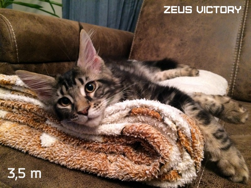 Zeus Victory, 3,5 месяца