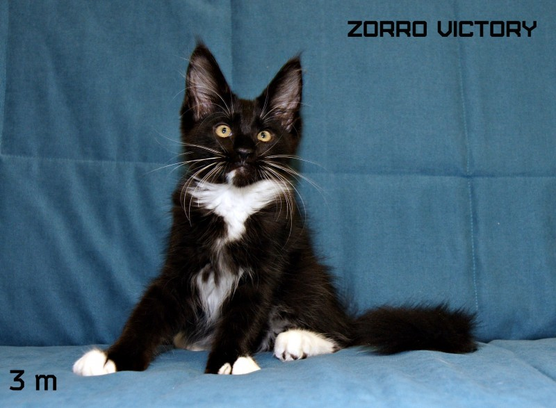 Zorro Victory, 3 месяца