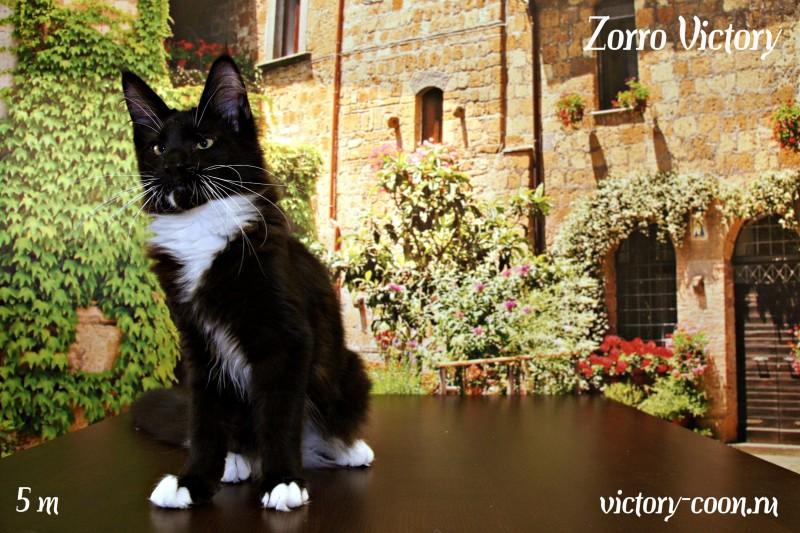 Zorro Victory, 5 месяцев