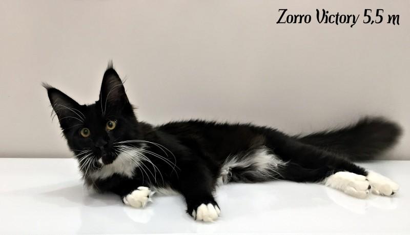 Zorro Victory, 5,5 месяцев