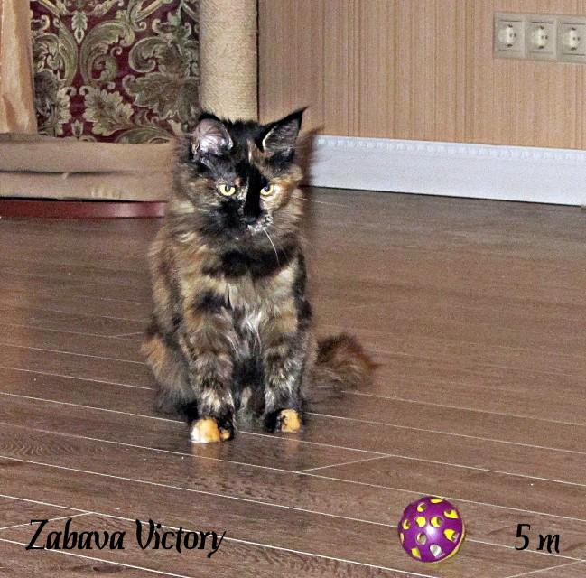 Zabava Victory, 5 месяцев