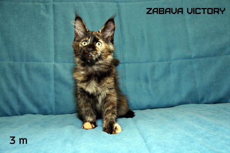 Zabava Victory, 3 месяца