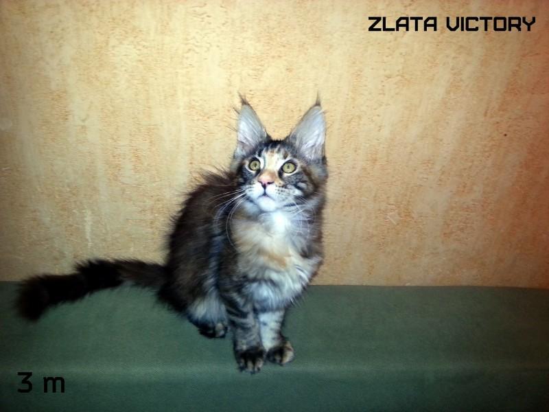 Zlata Victory, 3 месяца