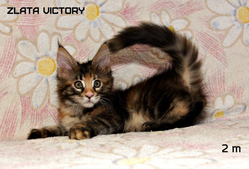 Zlata Victory, 2 месяца