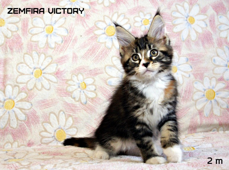 Zemfira Victory, 2 месяца