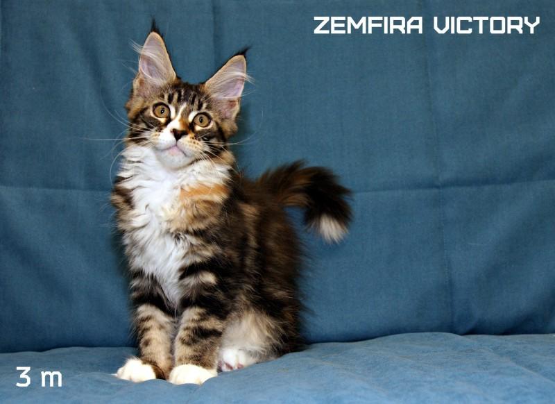 Zemfira Victory, 3 месяца