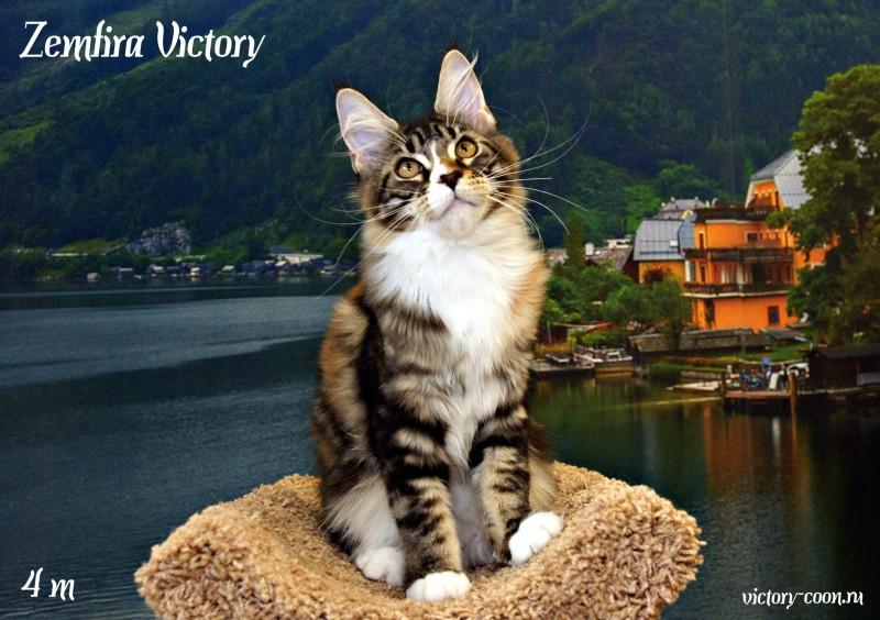 Zemfira Victory, 4 месяца