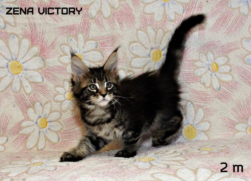 Zena Victory, 2 месяца