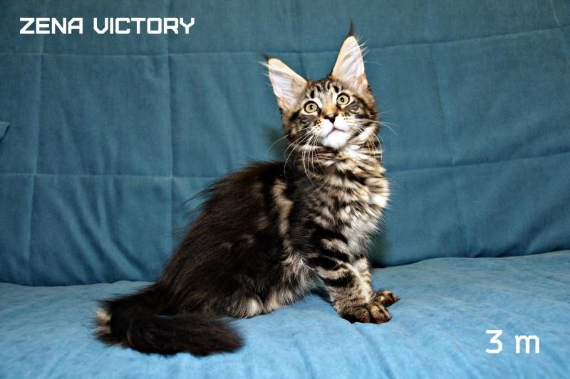 Zena Victory, 3 месяца