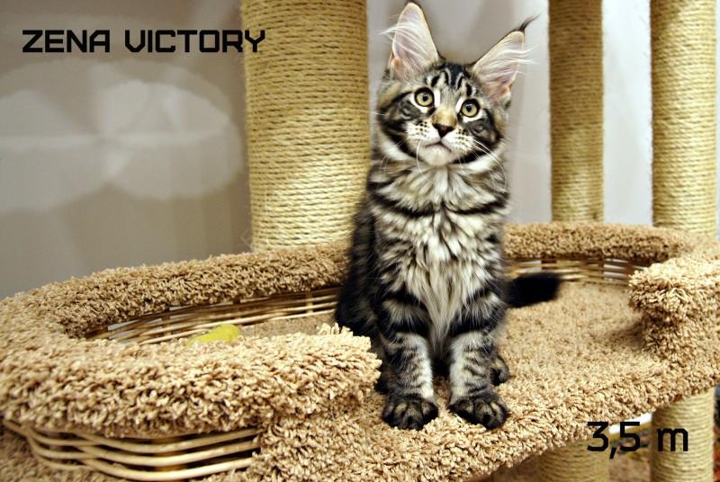 Zena Victory, 3,5 месяца
