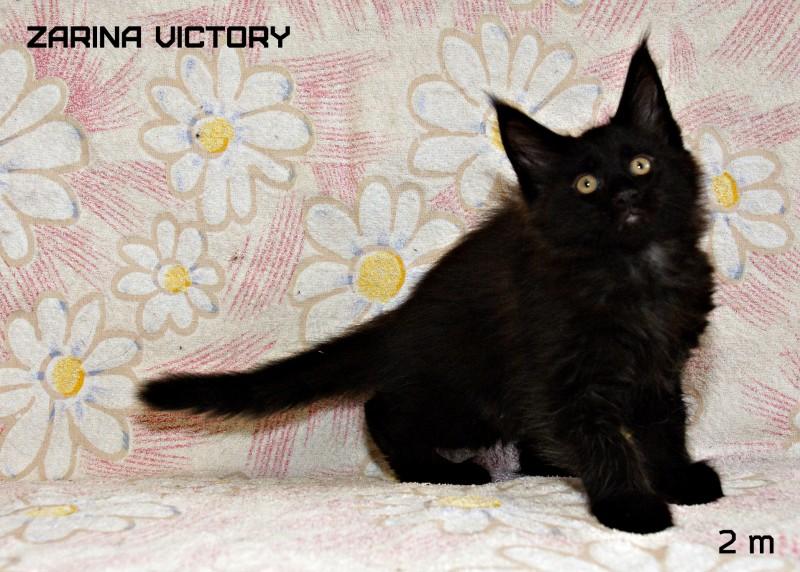 Zarina Victory, 2 месяца