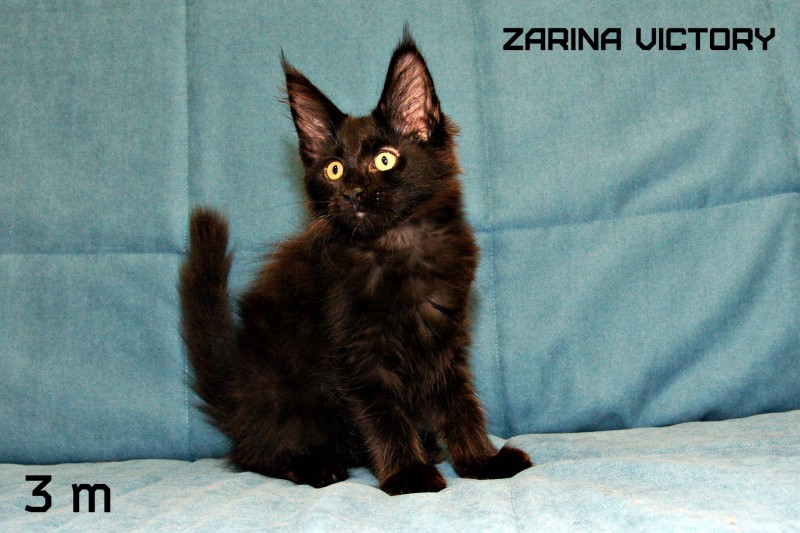 Zarina Victory, 3 месяца