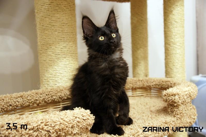 Zarina Victory, 3,5 месяца