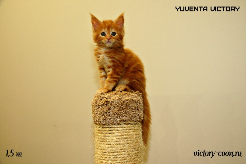 Yuventa Victory, 1,5 месяца