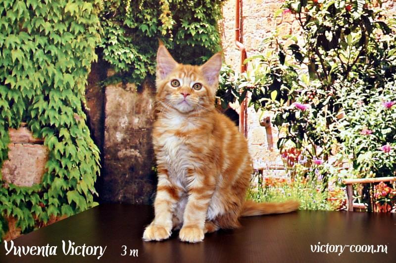 Yuventa Victory, 3 месяца