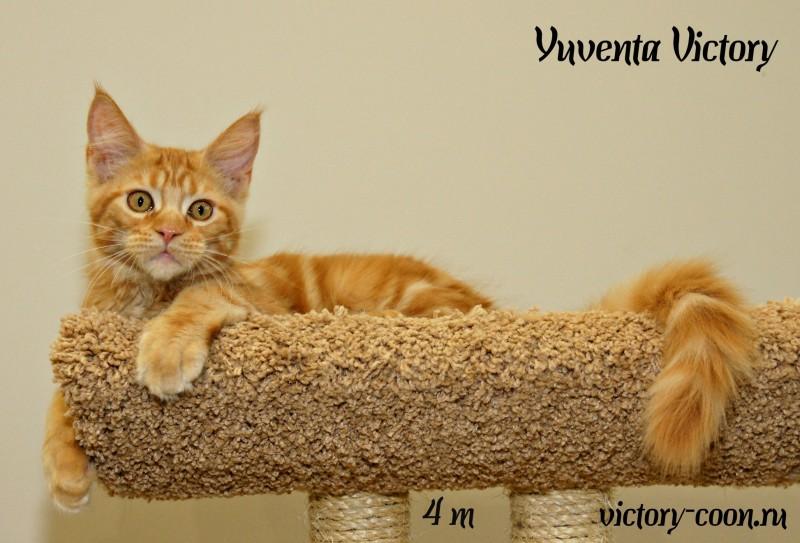 Yuventa Victory, 4 месяца