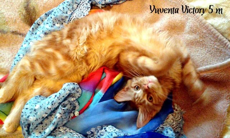 Yuventa Victory, 5 месяцев