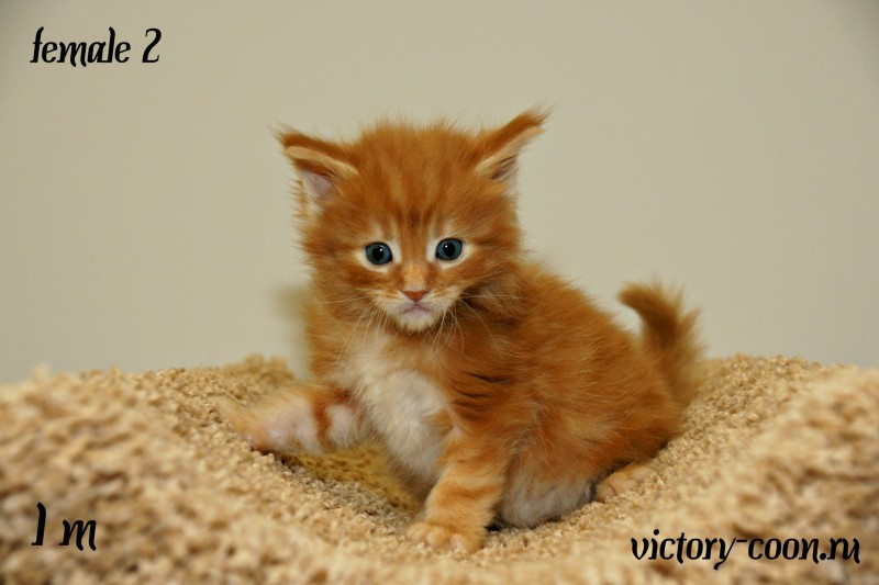 девочка 2, Victory