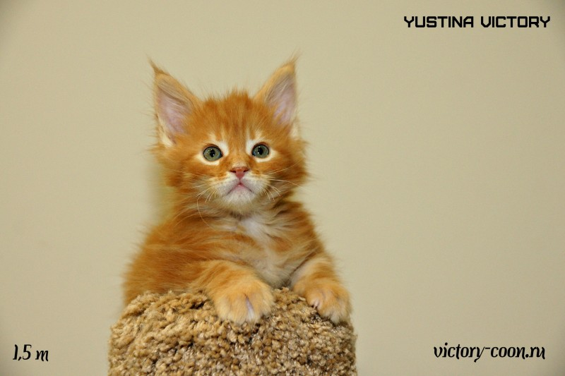 Yustina Victory, 1,5 месяца
