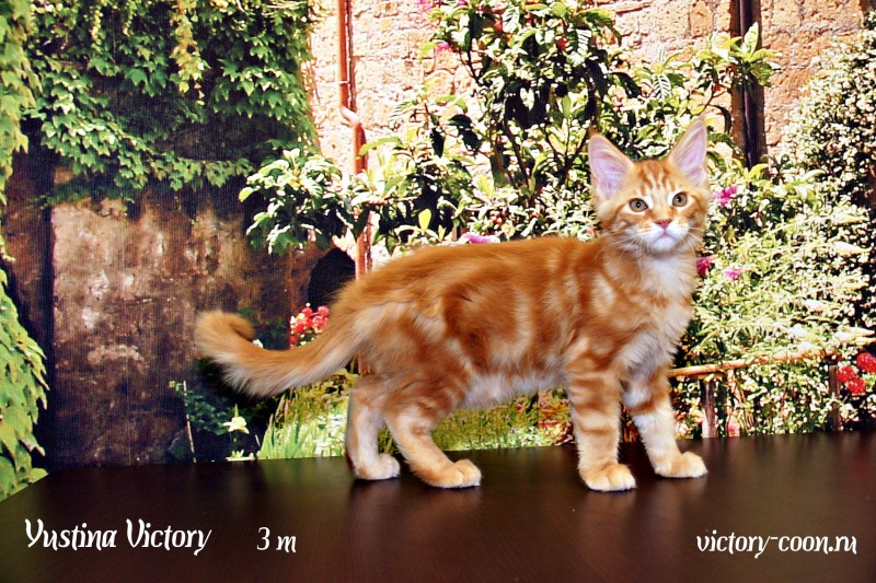 Yustina Victory, 3 месяца
