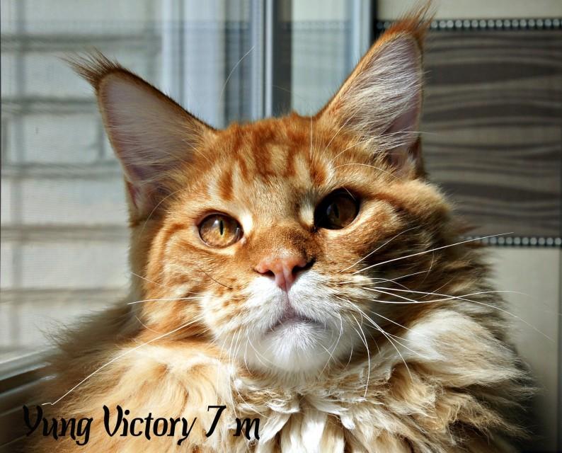 Yung Victory, 7 месяцев