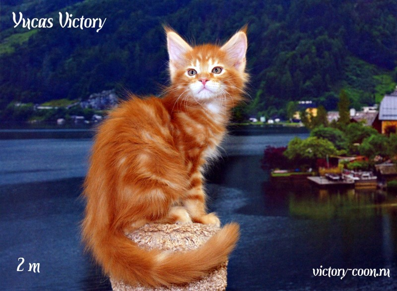 Yucas Victory, 2 месяца
