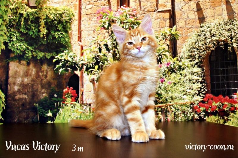 Yucas Victory, 3 месяца