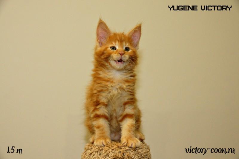 Yugene Victory, 1,5 месяца