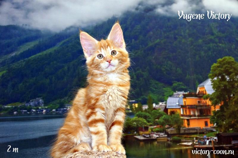 Yugene Victory, 2 месяца
