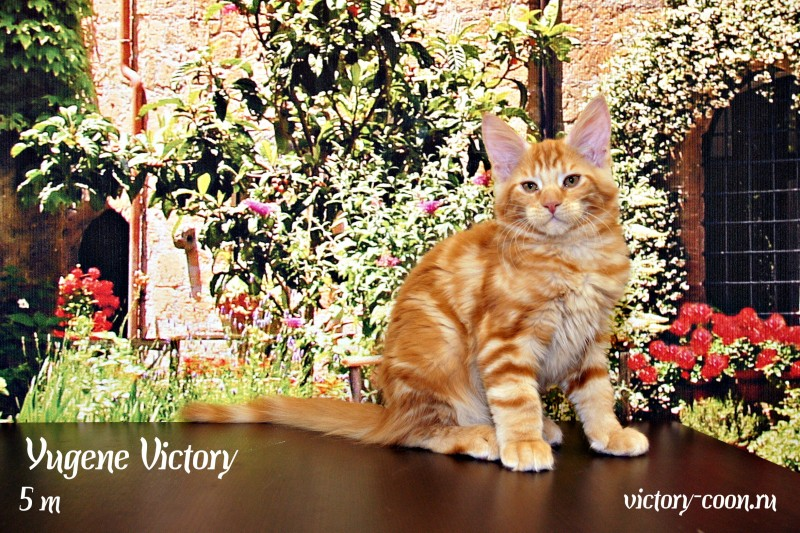 Yugene Victory, 3 месяца