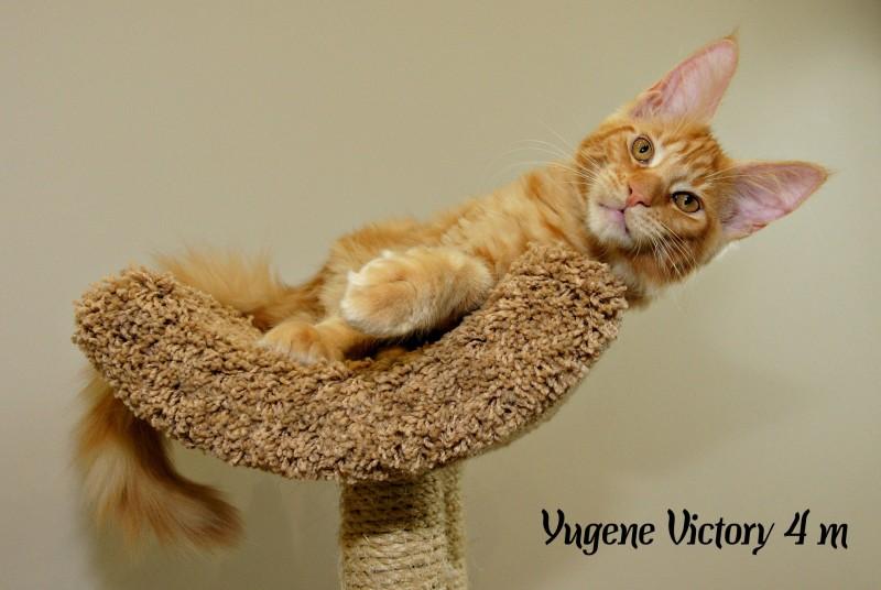 Yugene Victory, 4 месяца
