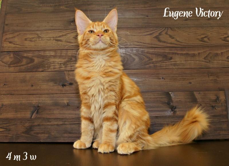 Eugene Victory, 4 месяца 3 месяца