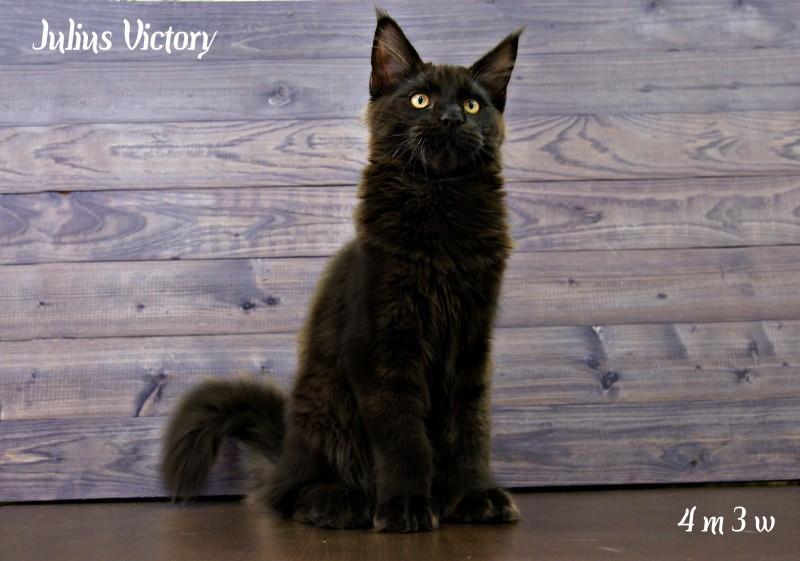 Yulius Victory, 4 месяца 3 недели