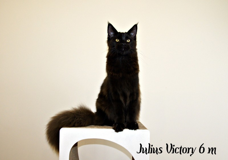 Yulius Victory, 6 месяцев