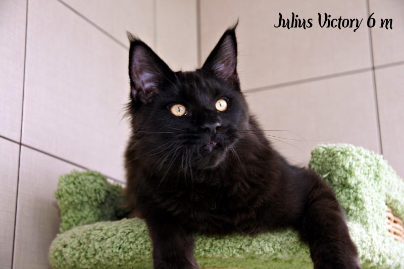 Julius Victory, 6 месяцев