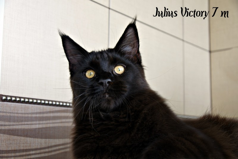 Julius Victory, 7 месяцев