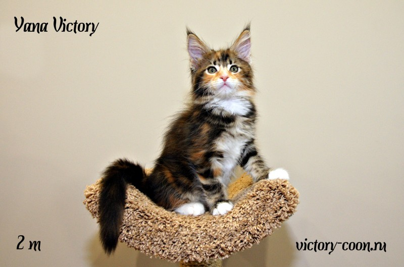 Yana Victory, 2 месяца