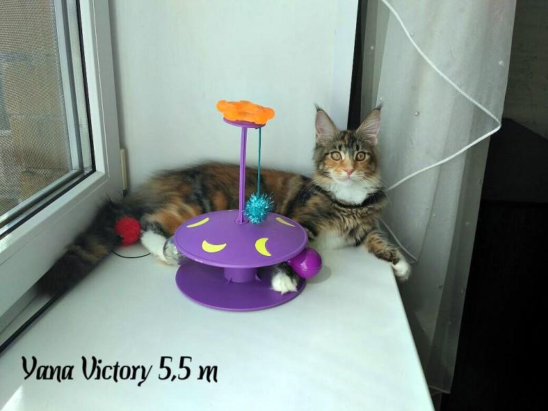 Yana Victory, 5,5 месяцев