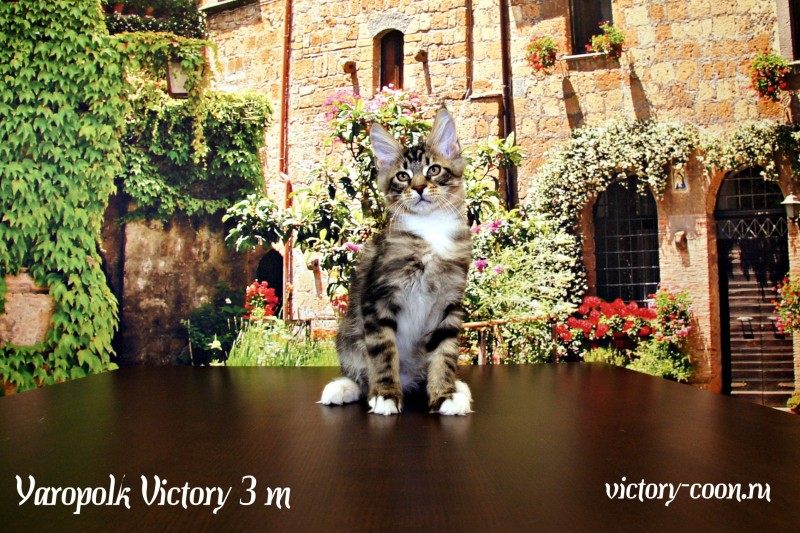 Yaropolk Victory, 3 месяца