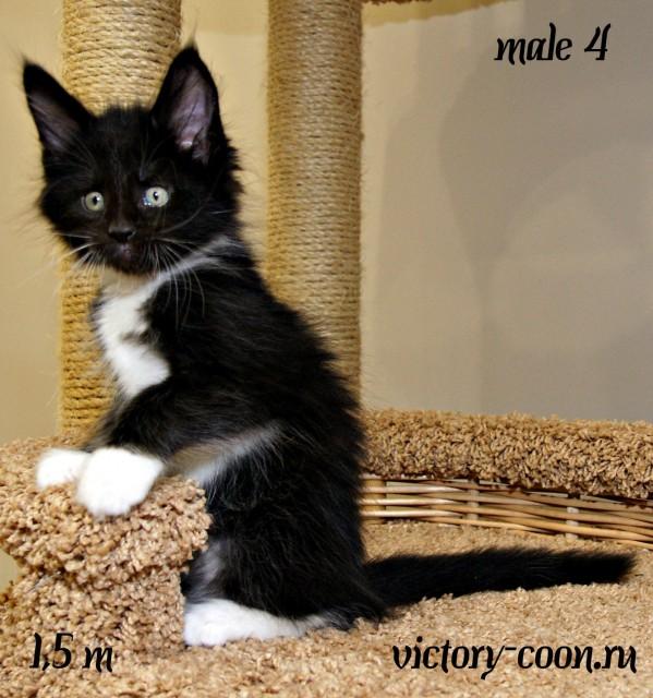 Yarobor Victory, 1,5 месяца