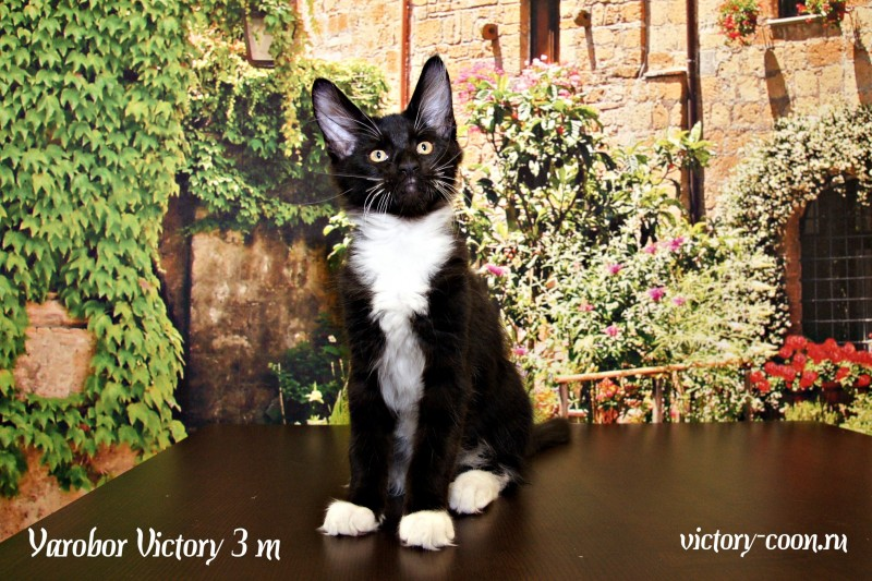 Yarobor Victory, 3 месяца
